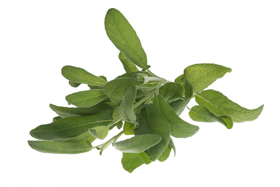 Salvia leikattu 100 g